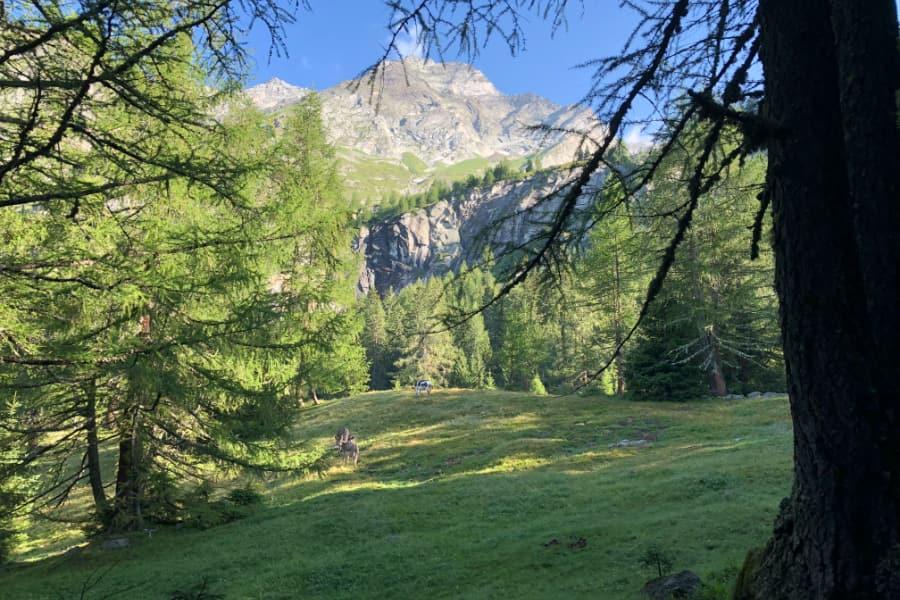 Escursione in Valle Anzasca all'Alpe Cicerwald - Est del Monte Rosa
